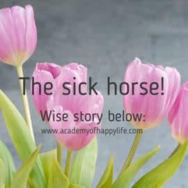 The sick horse!