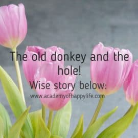 The old donkey