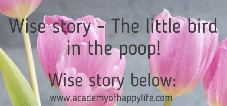 Wise story – The little bird in the poop!