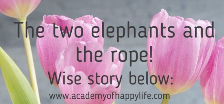 The two elephants and the rope!